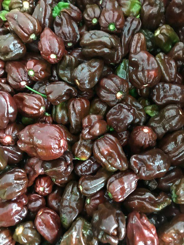 Habanero Chocolate